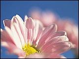 微距下的花香 31 - [wall001.com]_focus_micro_flower_31.jpg